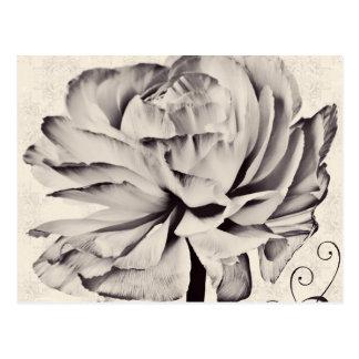 白いRanunculusの花の黒の背景 ポストカード