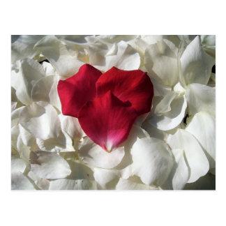白くおよび赤いバラの花びらの郵便はがき はがき
