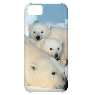 白くまの幼いこども1 iPhone5Cケース