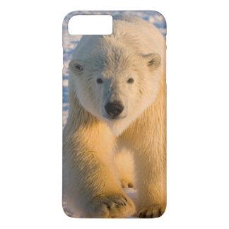 白くま、北極Ursusのmaritimusは氷に関係します iPhone 8 Plus/7 Plusケース