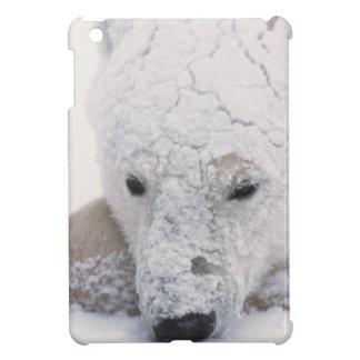白くま、Urus Maritimusの北極、Churchill、 iPad Miniケース
