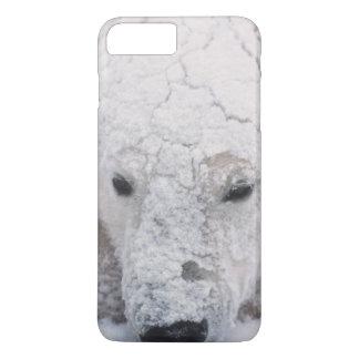 白くま、Urus Maritimusの北極、Churchill、 iPhone 8 Plus/7 Plusケース