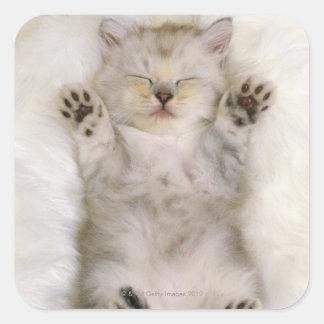 白く柔らかいカーペットで眠っている子ネコ高く スクエアシール