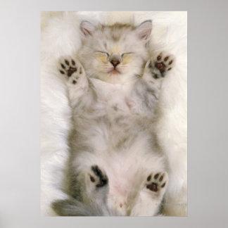 白く柔らかいカーペットで眠っている子ネコ高く ポスター