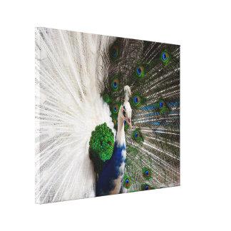 白く青い孔雀 キャンバスプリント