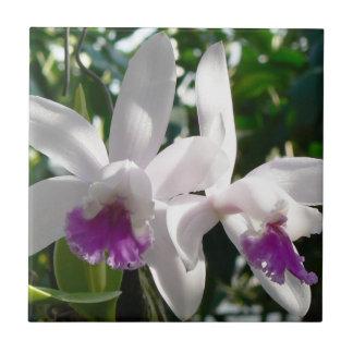 白く、ピンクの紫色の蘭 タイル