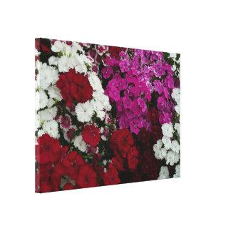 白く、ピンク赤いナデシコの花の写真 キャンバスプリント