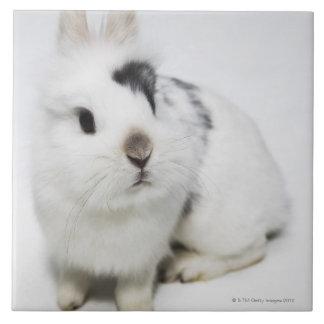 白く、黒いおよび茶色のウサギ タイル