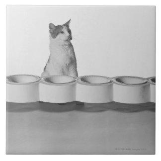 白でペットボールの側で坐り、舐めている猫 正方形タイル大