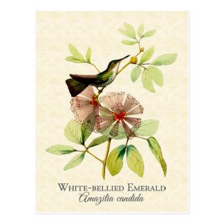 白によって膨らまされるエメラルドのハチドリのヴィンテージの芸術 ポストカード