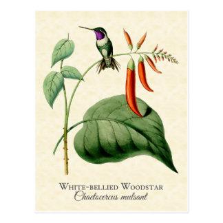 白によって膨らまされるWoodstarのハチドリのヴィンテージの芸術 ポストカード