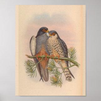 白によって飛ぶKestrelのタカの鳥のヴィンテージの芸術のプリント ポスター
