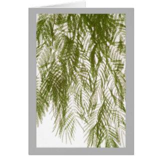 白の柔らかい春時間アカシアの葉 カード