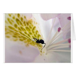 白の蟻 カード