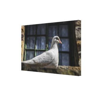 白の鳩 キャンバスプリント