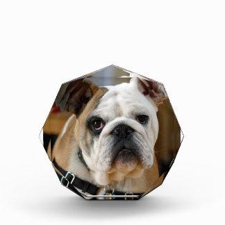 白みがかった茶色によって着色される英国のBull犬の提起 表彰盾