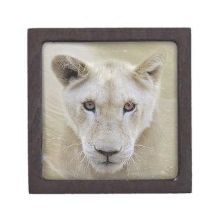 白人のライオンの精神の戦士アフリカ ギフトボックス