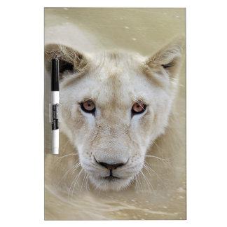 白人のライオンの精神の戦士アフリカ ホワイトボード