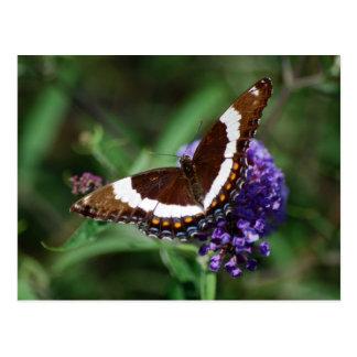 白人の海軍大将蝶の郵便はがき ポストカード