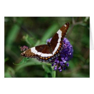 白人の海軍大将蝶カード グリーティングカード