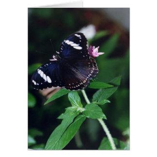 白人の海軍大将蝶 カード