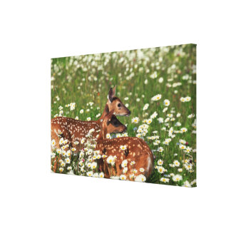 白後につかれたシカの子鹿 キャンバスプリント