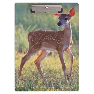 白後につかれたシカ(Odocoileus Virginianus)の子鹿 クリップボード