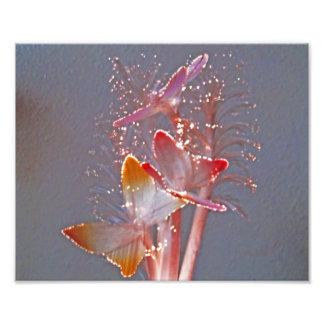 白熱[赤熱]光を放つな繊維光学の蝶写真のプリント フォトプリント