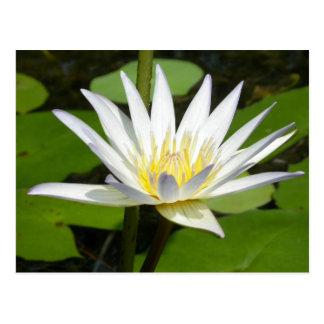 白蓮教の花の郵便はがき ポストカード