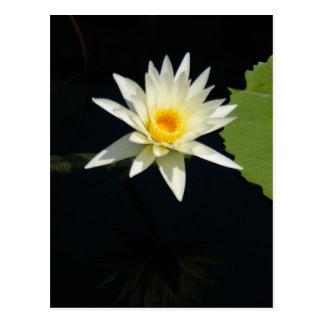 白蓮教の《植物》スイレンの郵便はがき ポストカード