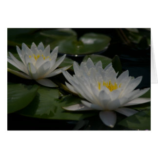 白蓮教の《植物》スイレンカード カード