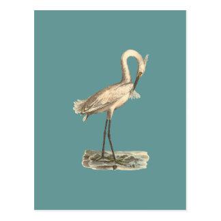 白頂点に達された鷲(Ardeaのcandidissima) ポストカード