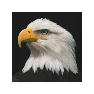 白頭鷲のポートレート キャンバスプリント