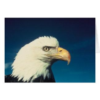 白頭鷲の挨拶状 カード