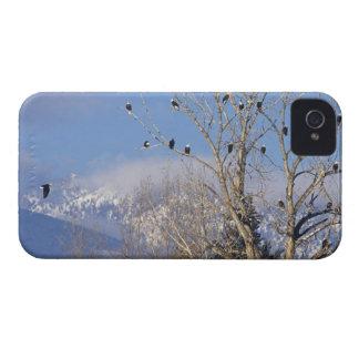 白頭鷲のTreefulはハミルトンモンタナに近づきます iPhone 4 カバー