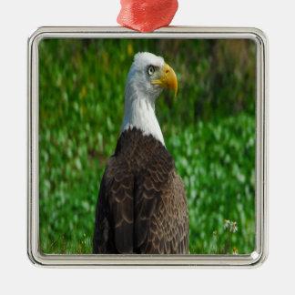 白頭鷲 メタルオーナメント