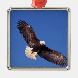 白頭鷲、Haliaeetusのleucocephalus、飛行中に3 メタルオーナメント