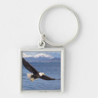 白頭鷲、Haliaeetusのleucocephalus、飛行中に4 キーホルダー