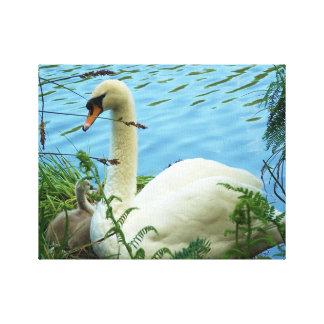 白鳥およびCygnet Tehidyコーンウォールイギリス キャンバスプリント