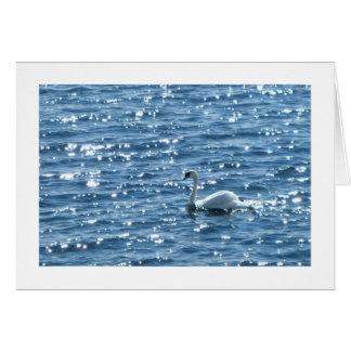白鳥のカーディフ湾、カーディフ、ウェールズ カード