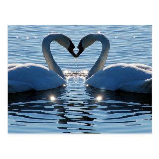 白鳥のハートのキス、愛の反射 はがき