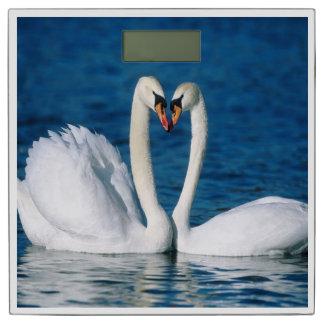 白鳥の体重計 体重計
