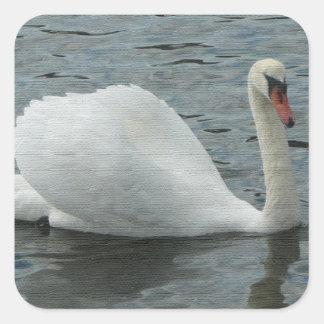白鳥の水泳 スクエアシール