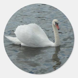 白鳥の水泳 ラウンドシール