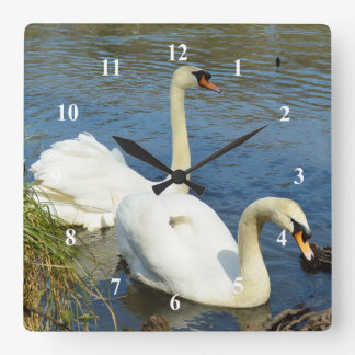 白鳥のTehidyの国公園コーンウォールイギリス スクエア壁時計