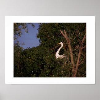 白鷺のプリント ポスター