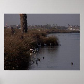 白鷺の収集のプリント ポスター