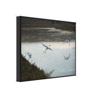 白鷺の鳥の野性生物動物の写真撮影 キャンバスプリント