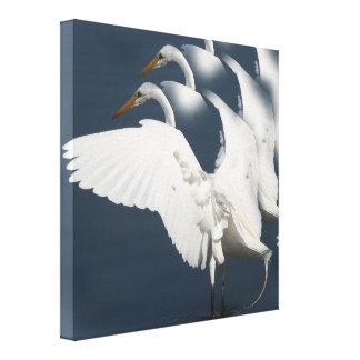 白鷺の鳥の野性生物動物の沼地の写真撮影 キャンバスプリント
