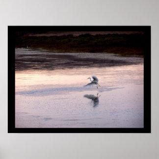 白鷺の鳥の野性生物動物の沼地の写真撮影 ポスター